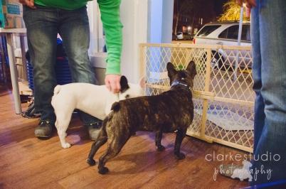 2013, French BullDog Meet Up at Republic of Paws
